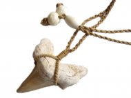Moroccan Fossilized Shark Tooth with Brown Adjustable Cord